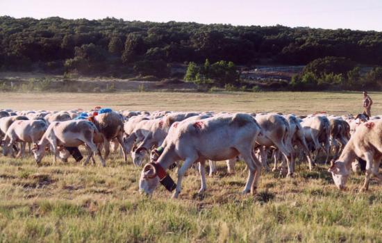 Le Larzac, terre de pastoralisme