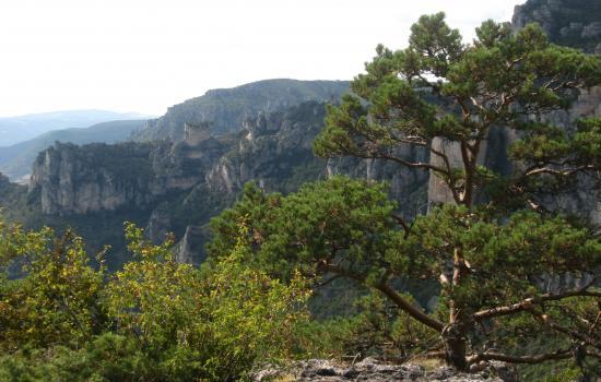 Randonnée en surplomb des Gorges du Tarn