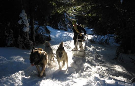 Passage en sous-bois en attelage à chiens