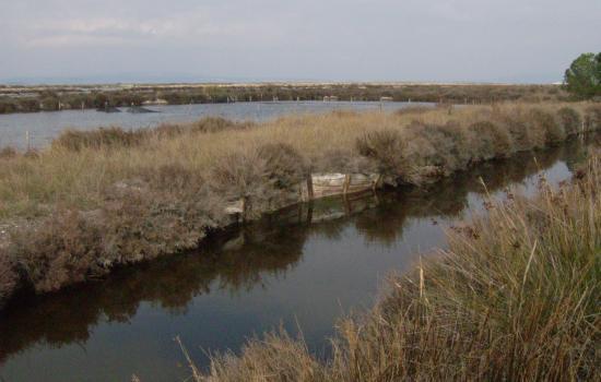 Canaux à proximité du bassin de Thau