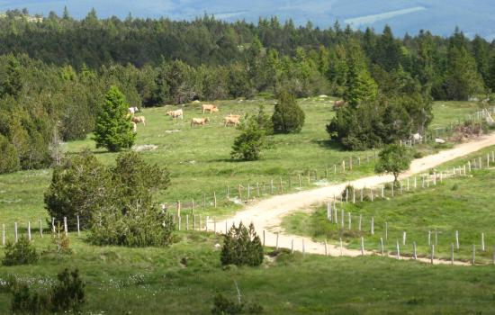 Paysage contrasté fait de lande, forêt de résineux et blocs grantiques