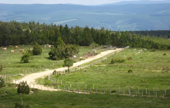 Chemin du Mont lozère