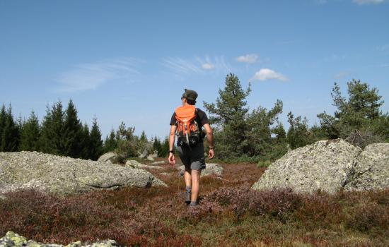 Marcher à travers les landes d'altitude
