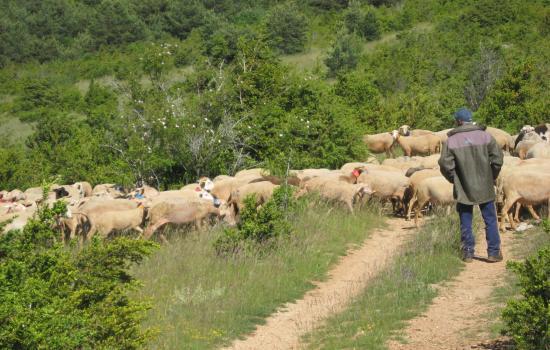 Agro-pastoral