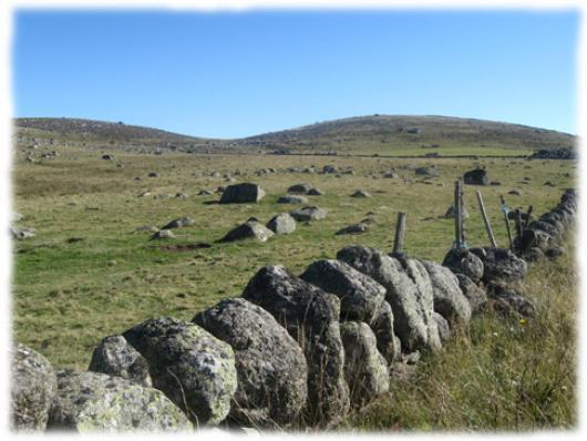 Les paysages de l'Aubrac ne laissent jamais indifferents: les prairies bordees de murets de granit, les vaches Aubrac et leurs longues cornes, superbes hetraies