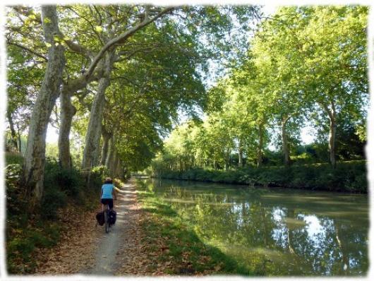 Randonnée vélo paisible sous les platanes du canal du midi