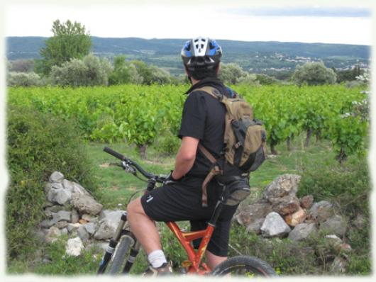Bike and vineyards in Coteaux du Languedoc