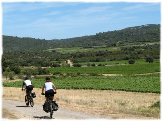 A vélo dans le vignoble du Languedoc