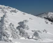 Arbres plâtrés de neige sur les flancs sud de l'Aigoual