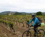 Balade à vélo entre vignes, garrigue et oliviers