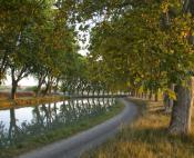 Sous les platanes, le canal du Midi