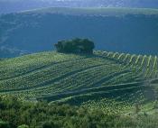 Vignoble Faugerois suivant les courbes de niveau