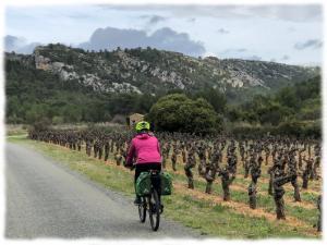 Cyclotourisme en Minervois à la découverte du vignoble